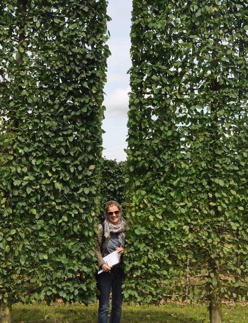 Kastenbäume, Grüne Heckenwände