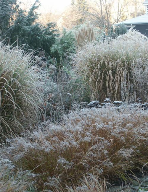 Wintergarten mit Raureif, Petra Pelz in Biederitz