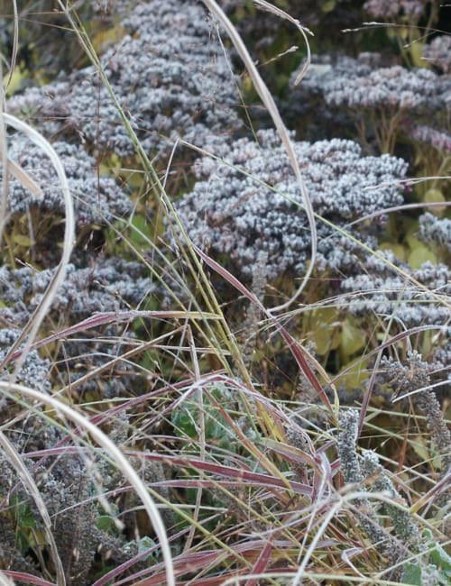 Sedum und Gräser mit Raureif im Garten Petra Pelz in Biederitz