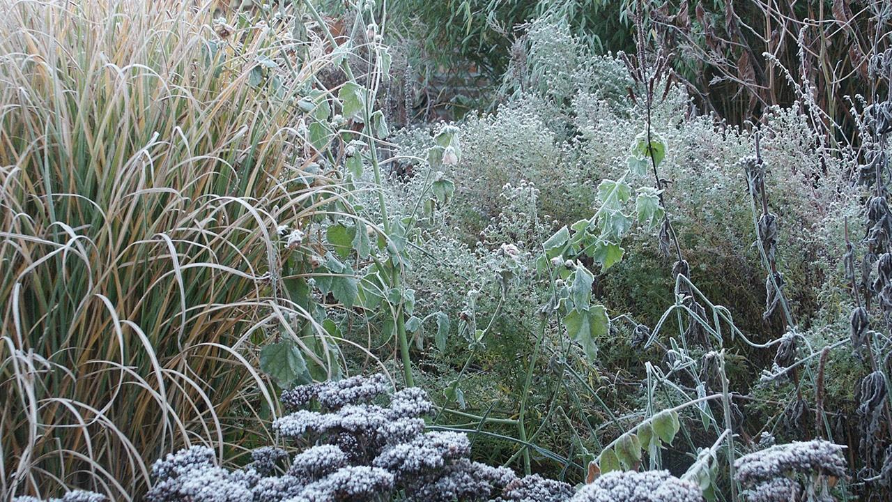 Winterstrukturen mit Raureif im Garten Petra Pelz in Biederitz