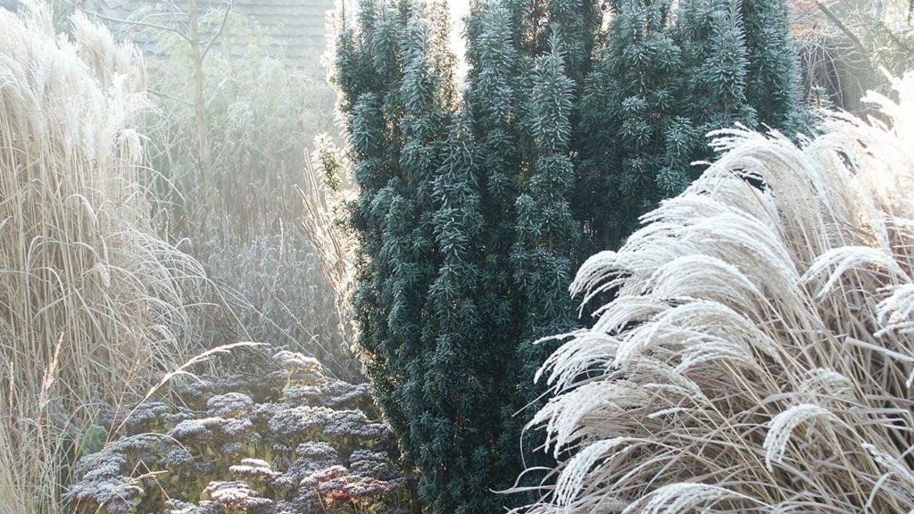 Winterzauber: Meine Tipps für einen schönen Wintergarten