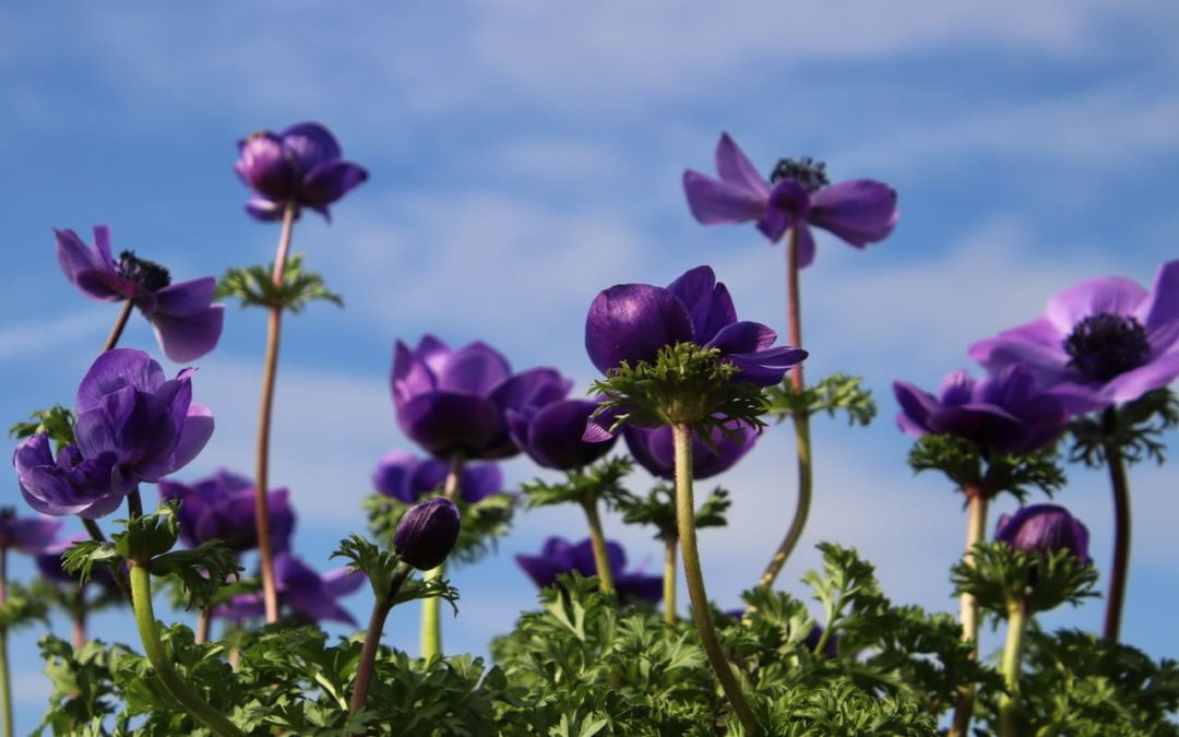 Blüte küsst Himmel