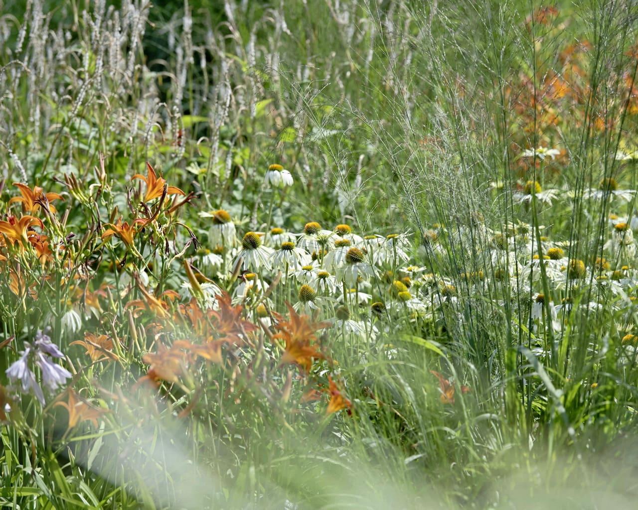 Bienefreundliche Pflanzen wie Purpursonnenhut und Taglilie