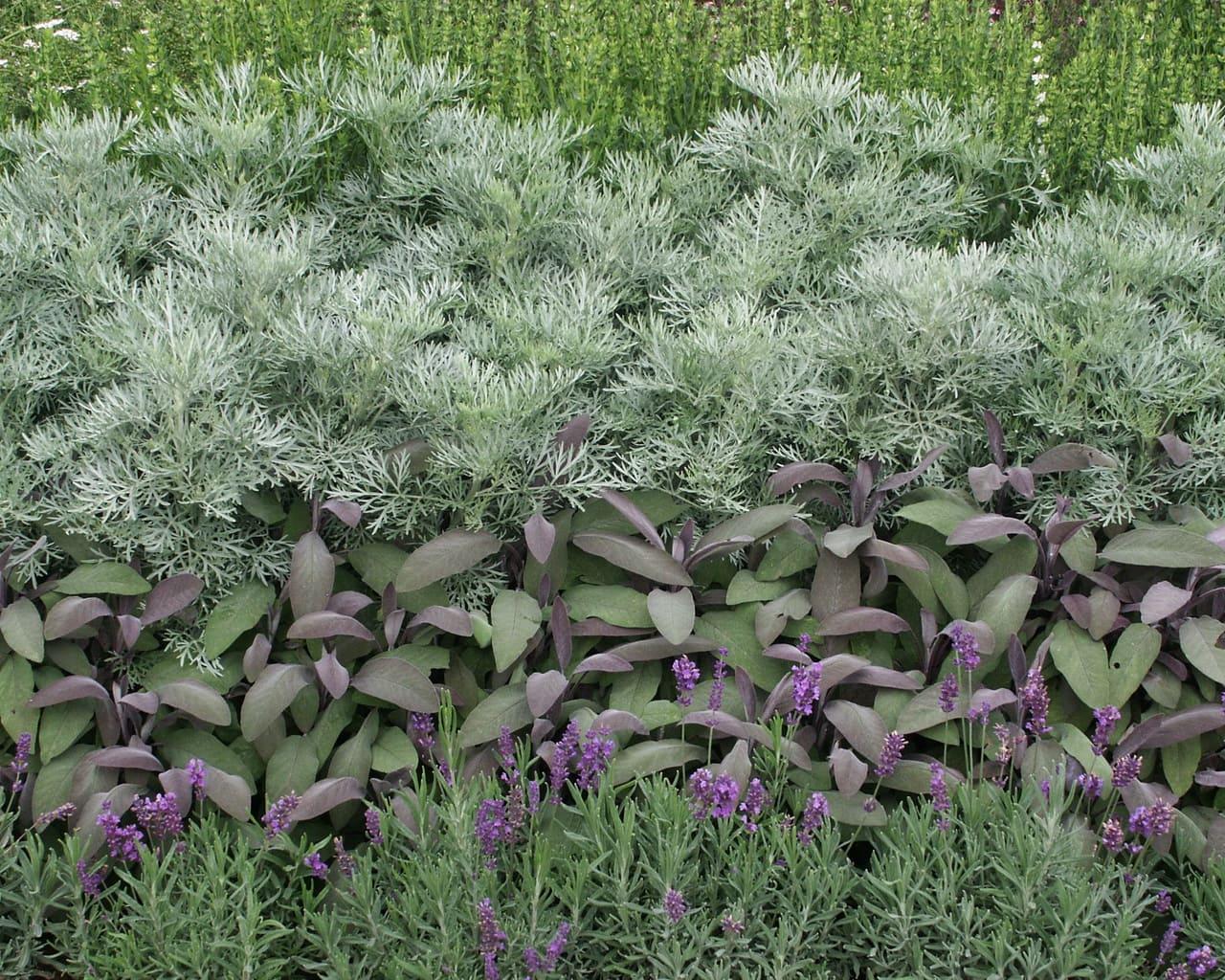 Kräuter Salbei, Lavendel, Ysop und Beifuss