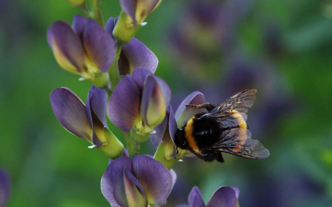 Warum Du JETZT bienenfreundliche Pflanzen in den Garten holen solltest