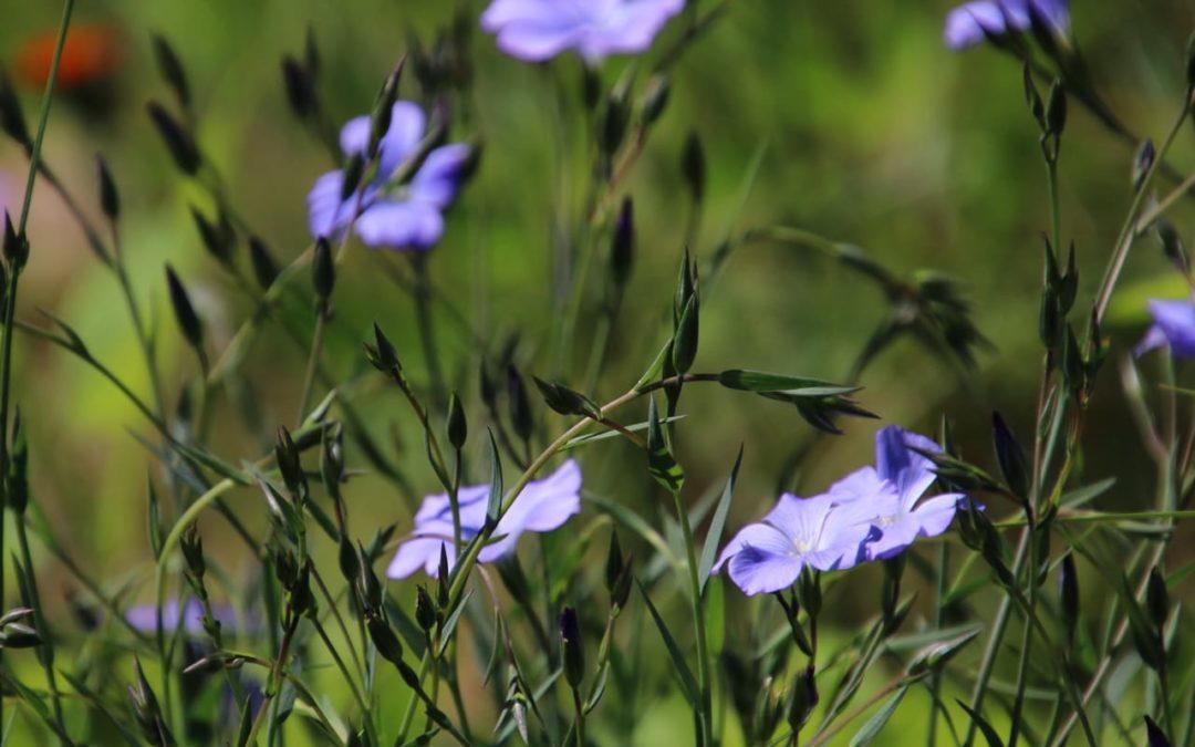Trockenheit im Garten – so gestaltest du den Garten für trockene Standorte pflegeleicht