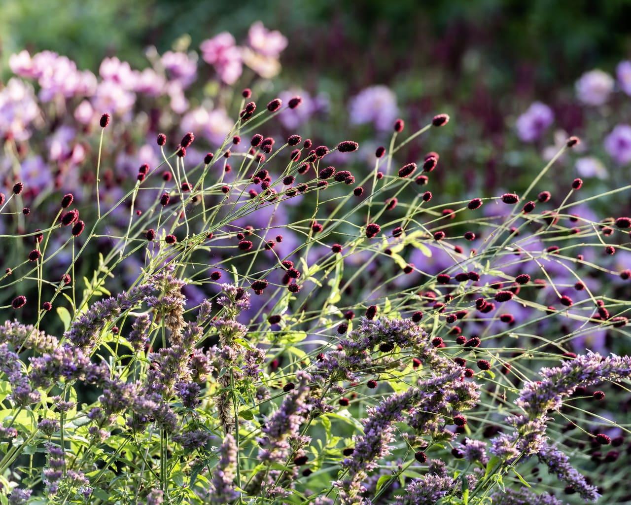 warum sie jetzt bienenfreundliche pflanzen in den garten holen sollten design nat rlich petra. Black Bedroom Furniture Sets. Home Design Ideas