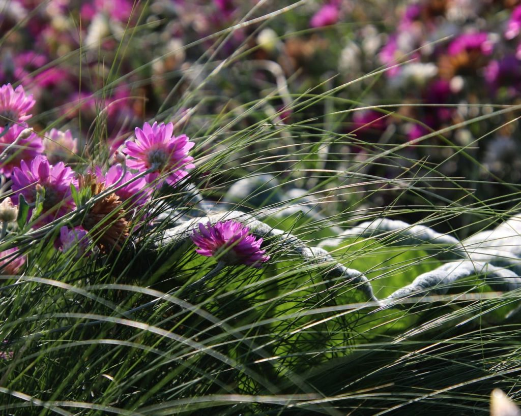 Sommerblumen auf der Landesgartenschau 2018 in Würzburg
