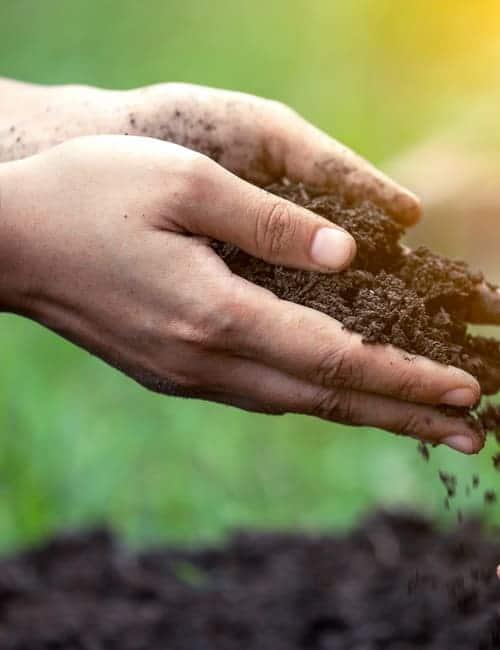 Bodenvorbereitung für Tulpenpflanzung