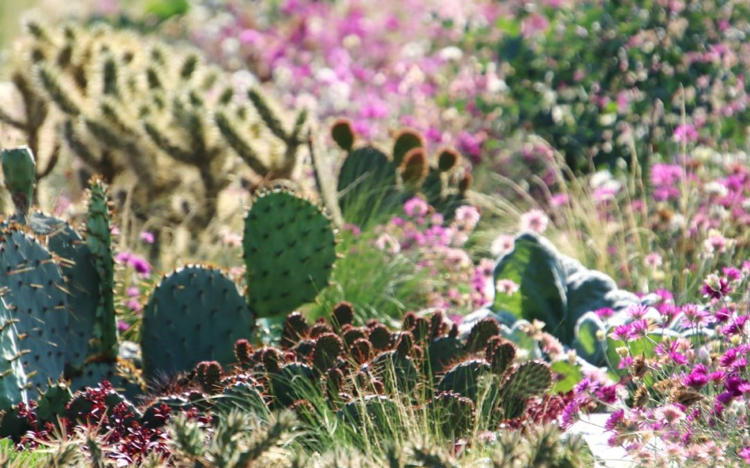 Gastbeitrag Klimawandel – so übersteht dein Garten die lange Trockenheit