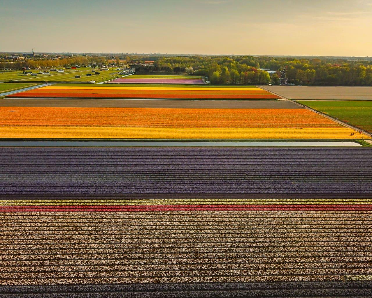 Tulpenfelder Holland Blütenlandschaften Frühlung