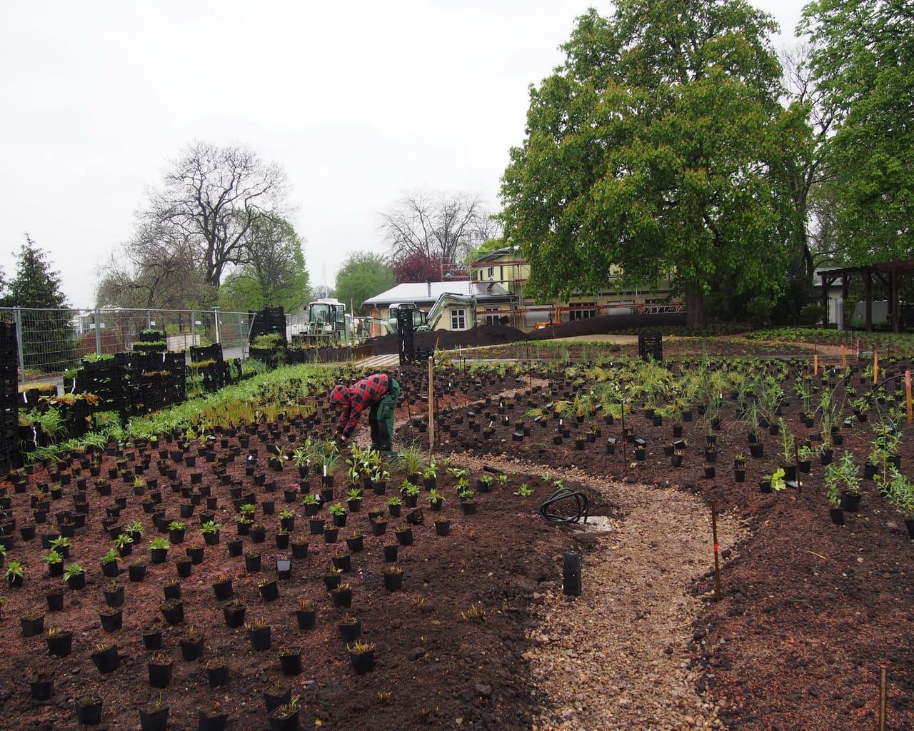 Pflanzarbeiten im Gräsergarten