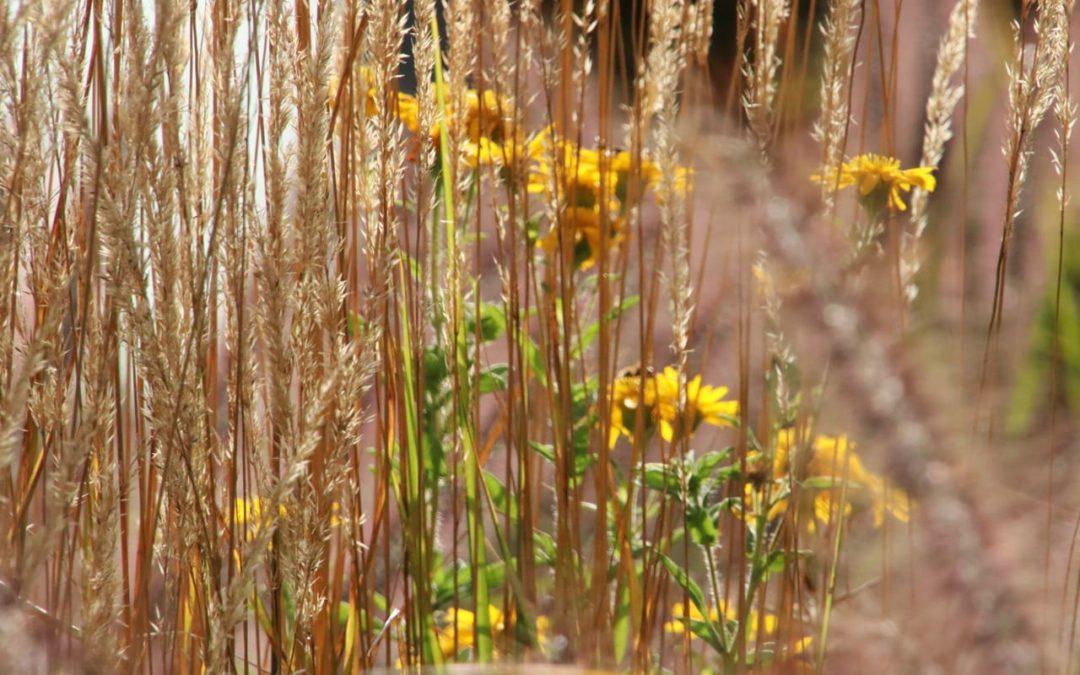 Zarte Gräser im sonnigen Garten