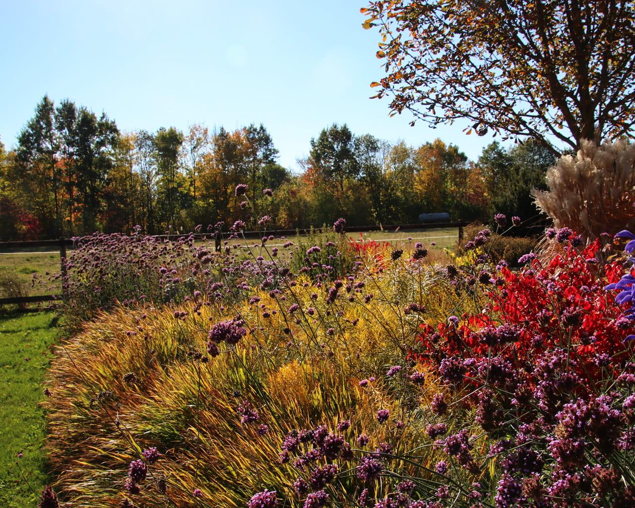 Herbstfärbung mit Japanwaldgras , Röhrenstern und Pfaffenhütchen, Garten Petra Pelz in Sehnde