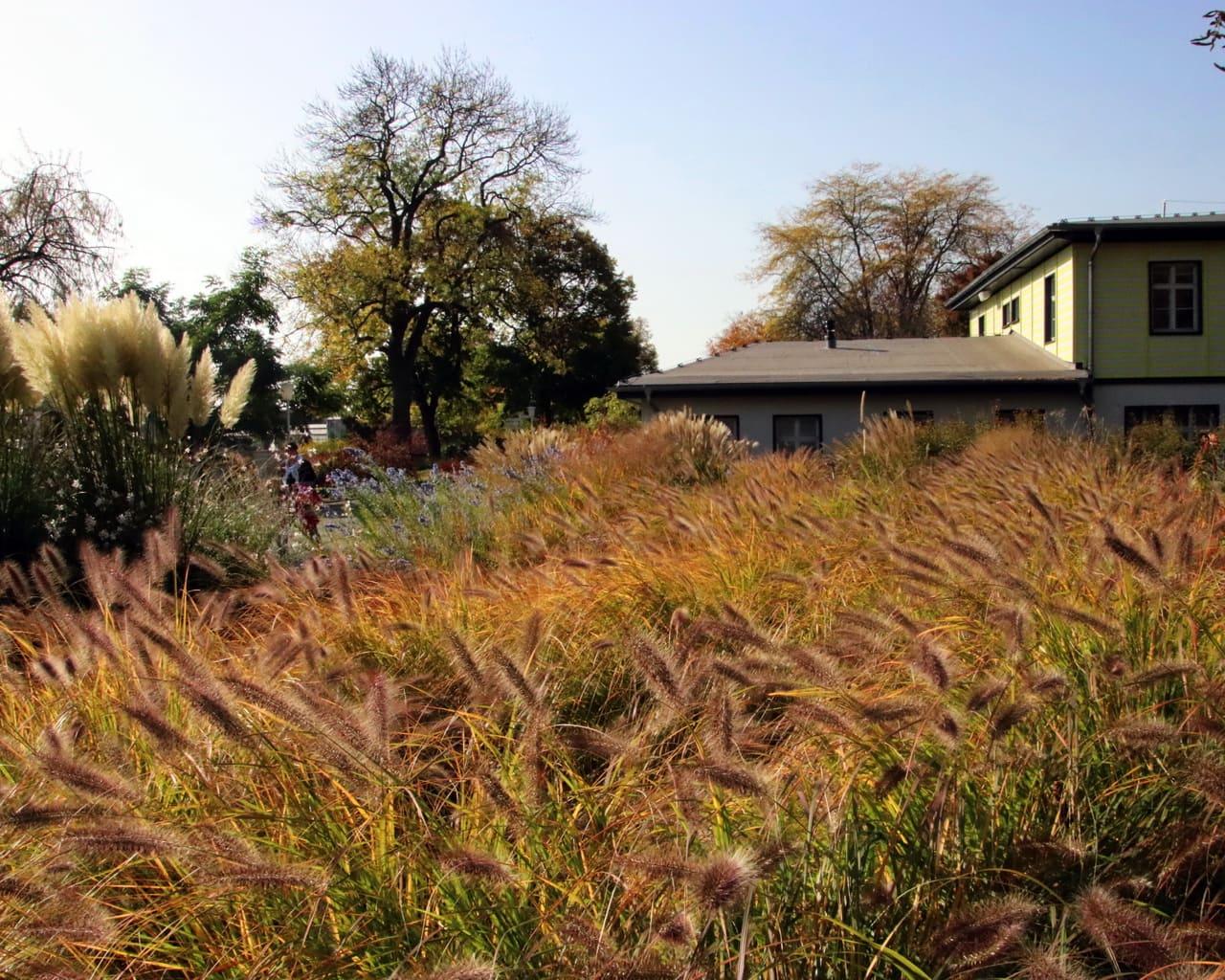Gräsergarten im ega Park, Planung Petra Pelz 2014, Pennisetum alopecoroides in Herbstfärbung, Pampasgras Cortaderia selloana