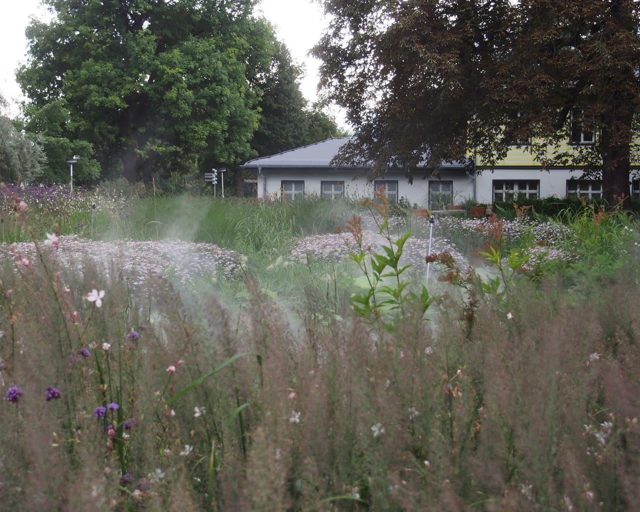 Gräsergarten im ega Park, Planung Petra Pelz 2014, Nebeldüsen überziehen die Pflanzen mit einem feinen Wasserschleier