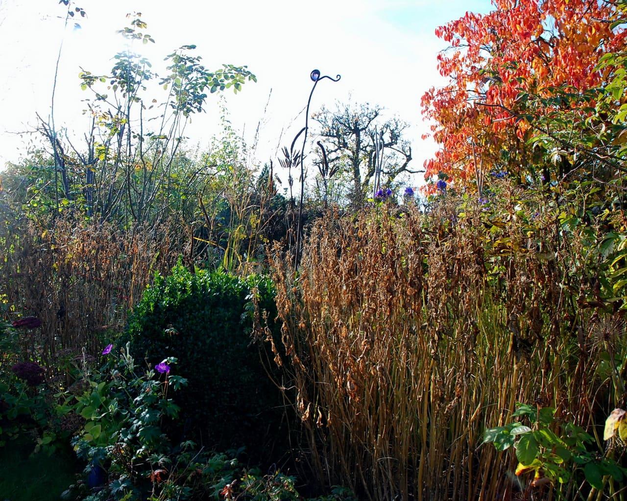 die Bestände von abgeblühtem Phlox bleiben im Garten und werden erst im Frühjahr geschnitten, Foto Xenia Rabe Lehmann