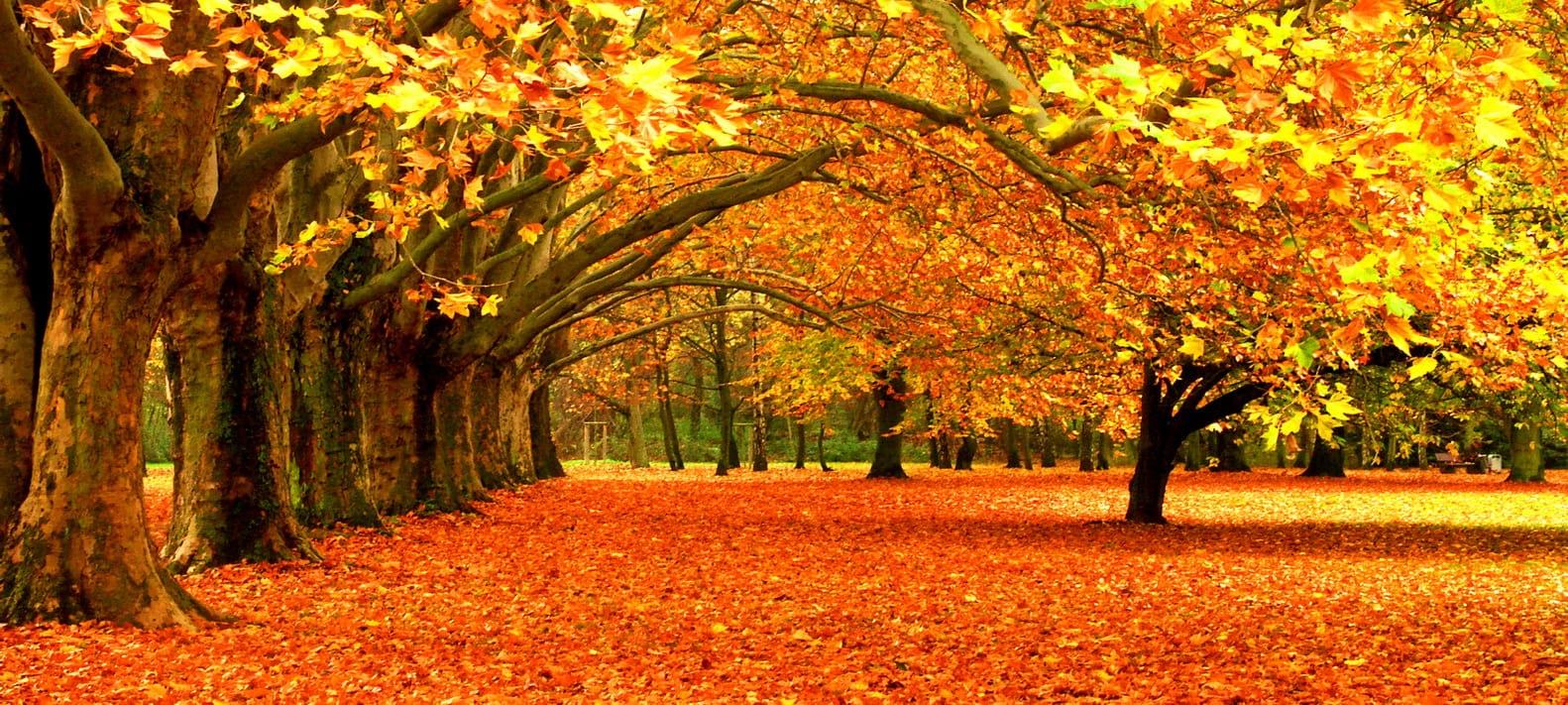 Farbenfrohe Herbstzeit , Bäume mit Herbstfärbung, Von Peter Igel Lizenzfreie Stockfotonummer: 46511 Fall in a Park