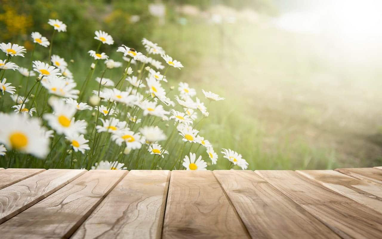 Holzdecks sind ideale Entspannungsflächen im Blütenmeer, von khuncho007 Lizenzfreie Stockfotonummer: 785519026