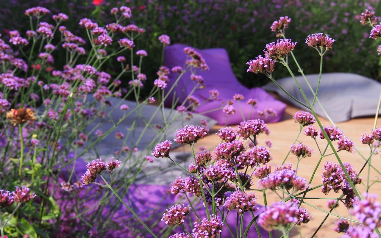 lauschige Plätzchen... versteckt im Blütenmeer