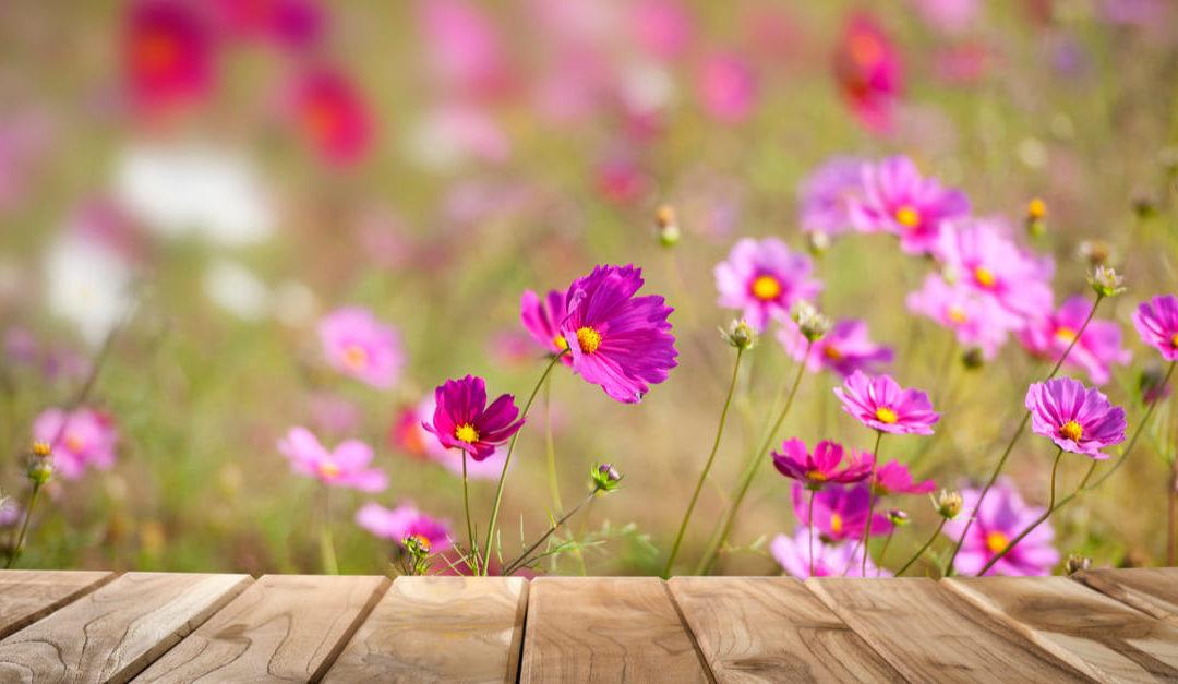 Wie Du eine Oase aus Pflanzen erschaffst (auch wenn Du keinen großen Garten hast)