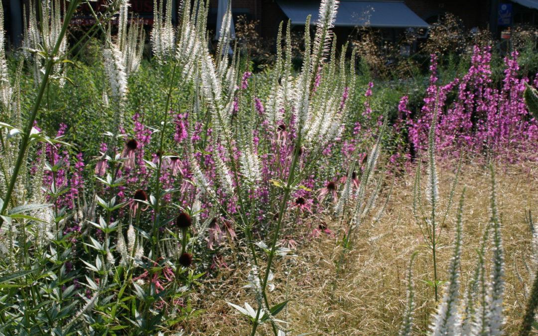 Sichtschutz pflanzen mit Stauden und Gräsern