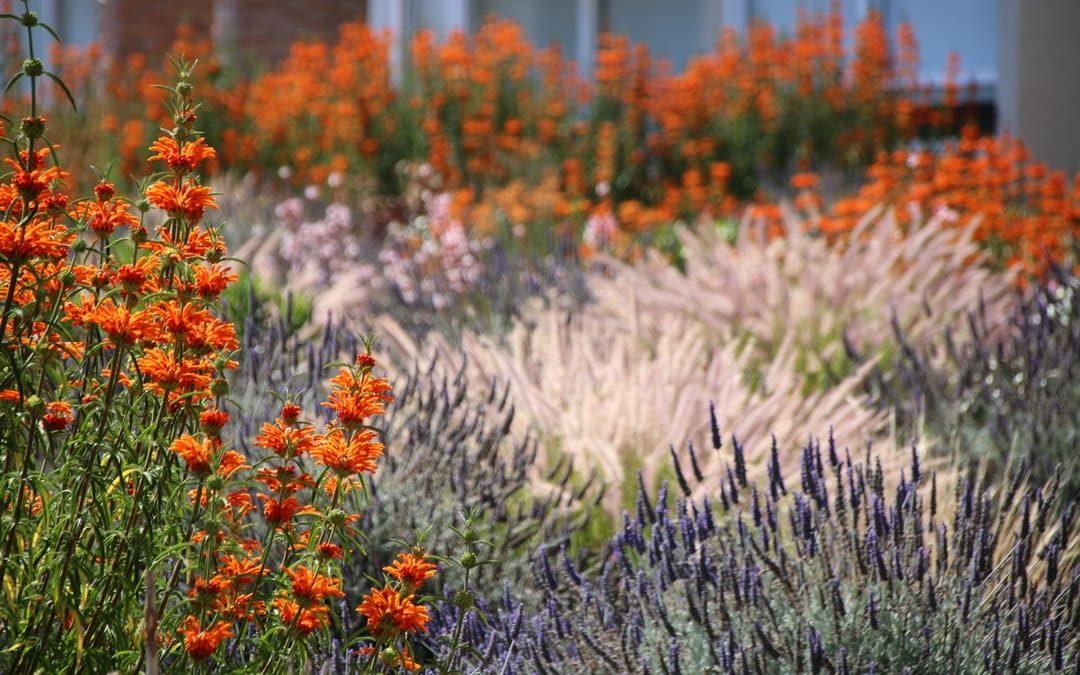 Sind chilenischen Gärten künftig ein Vorbild? Ich sage Ja!
