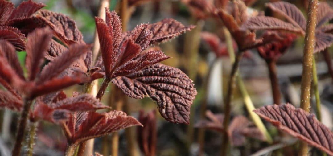 Vom Frühlingserwachen im Garten – frische Knospen – zartes Grün