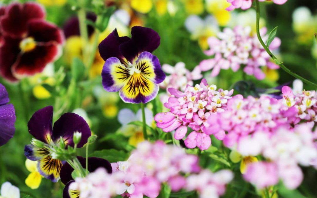 Frühlingsblumen – Ideen für Balkonkästen und Pflanzgefäße