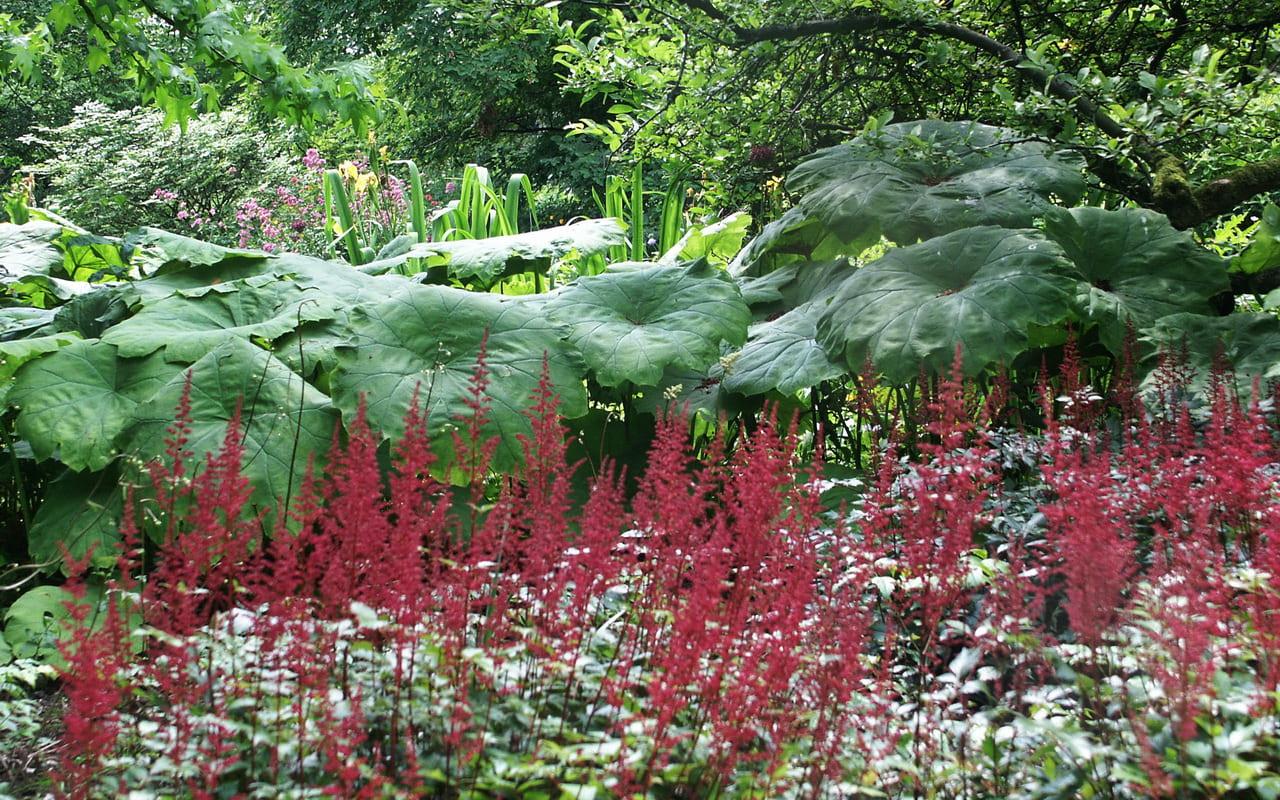 Waldgarten Pflanzen Die Im Schatten Wachsen Stilvolles Design