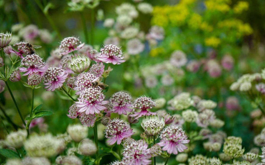 Waldgarten – Pflanzen die im Schatten wachsen