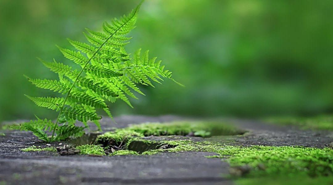 Schatten im Garten – Wie Du einen Waldgarten anlegst