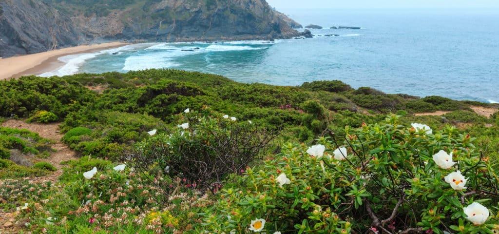 Natürliche Vegetationsbilder als Inspiration für deinen Garten