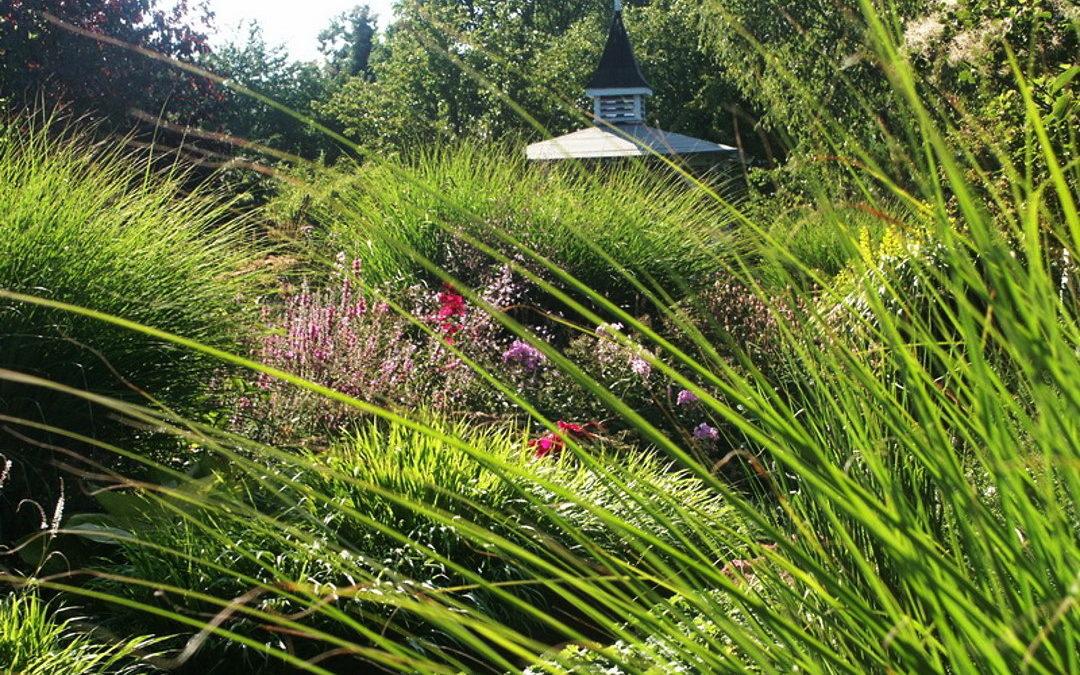 Staudenbeet im Garten – finde die perfekte Größe, Lage und Form
