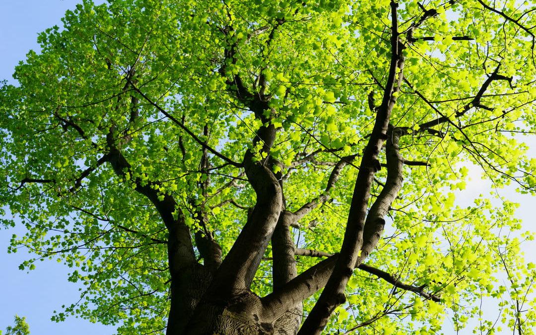 Klimawandel Bäume für große und kleine Privatgärten