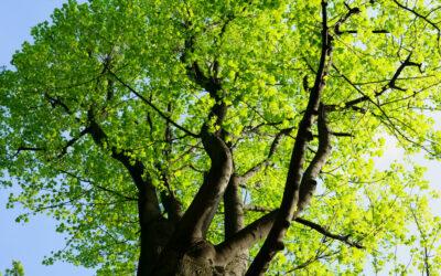 Klimawandel – Neue Bäume für große und kleine Privatgärten