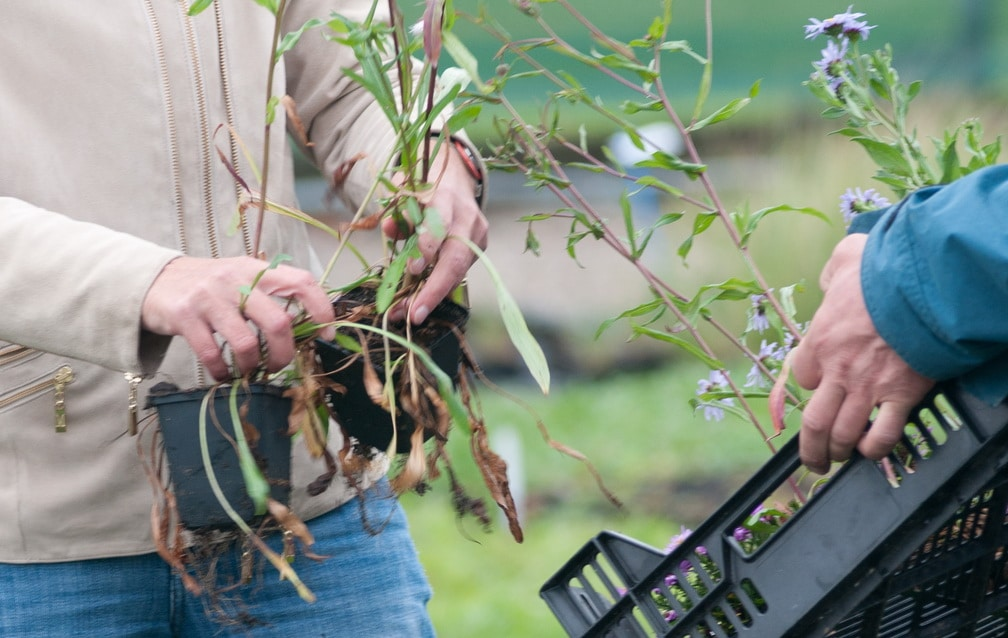 Lieblingspflanzen: Meine 10 besten Pflanzen für das Staudenbeet