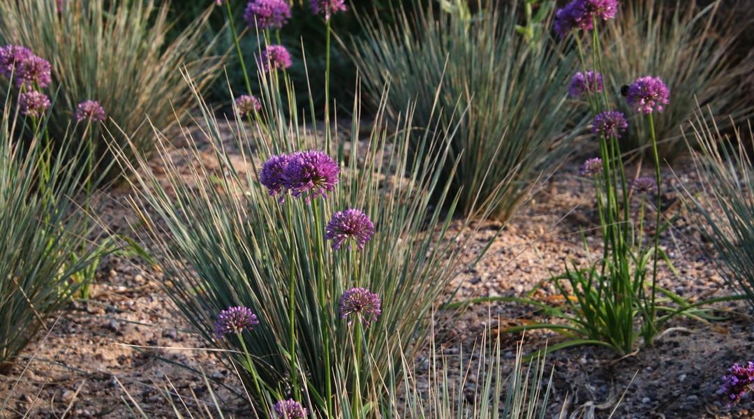 Staunässe und Trockenheit im Garten? – das kannst du tun
