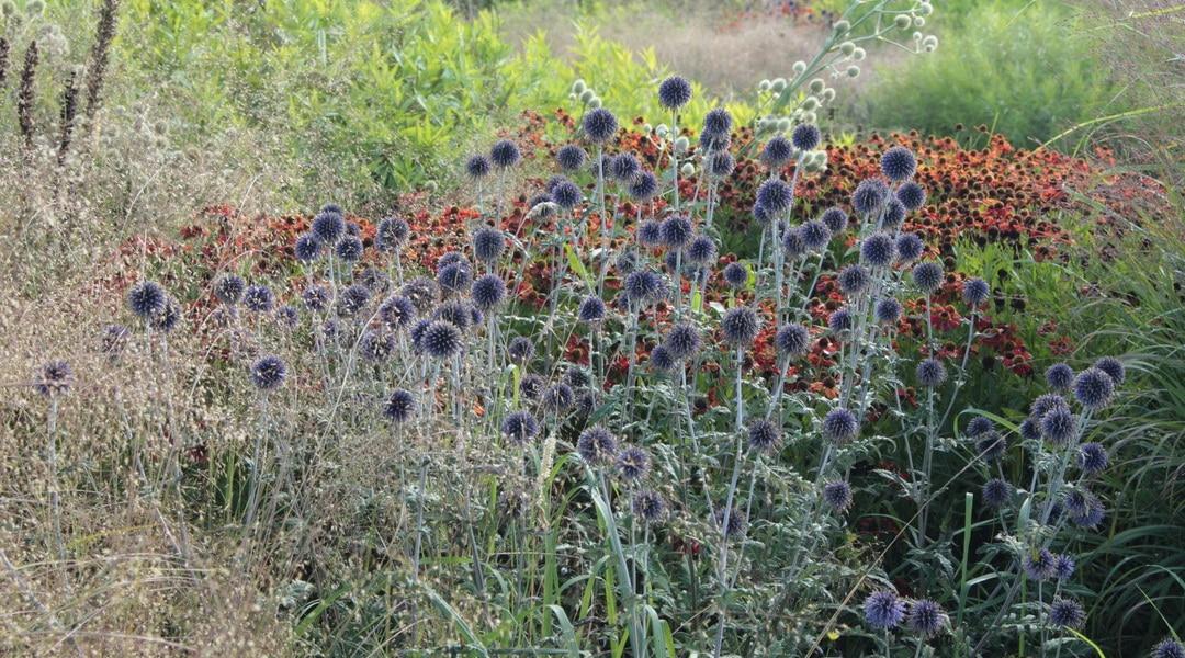 Garten: Gewinner und die Verlierer der sommerlichen Trockenheit