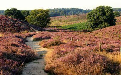 Einen Heidegarten anlegen