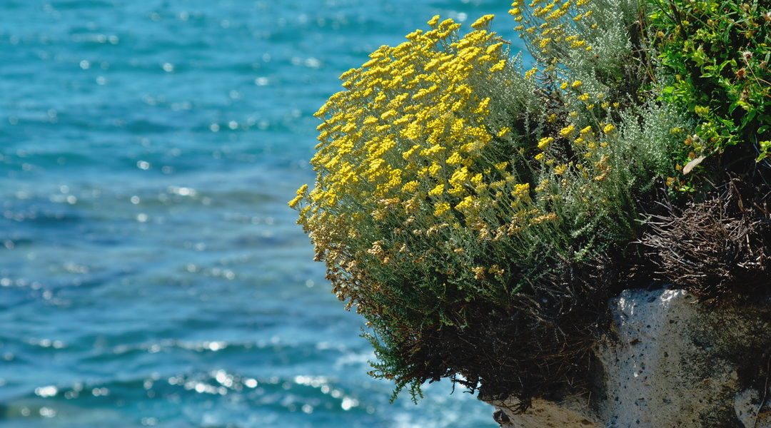 Küstengarten – ein Garten wie Urlaub am Meer