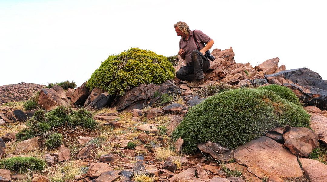 Igelpolster und andere Pflanzen für den trockenen Standort