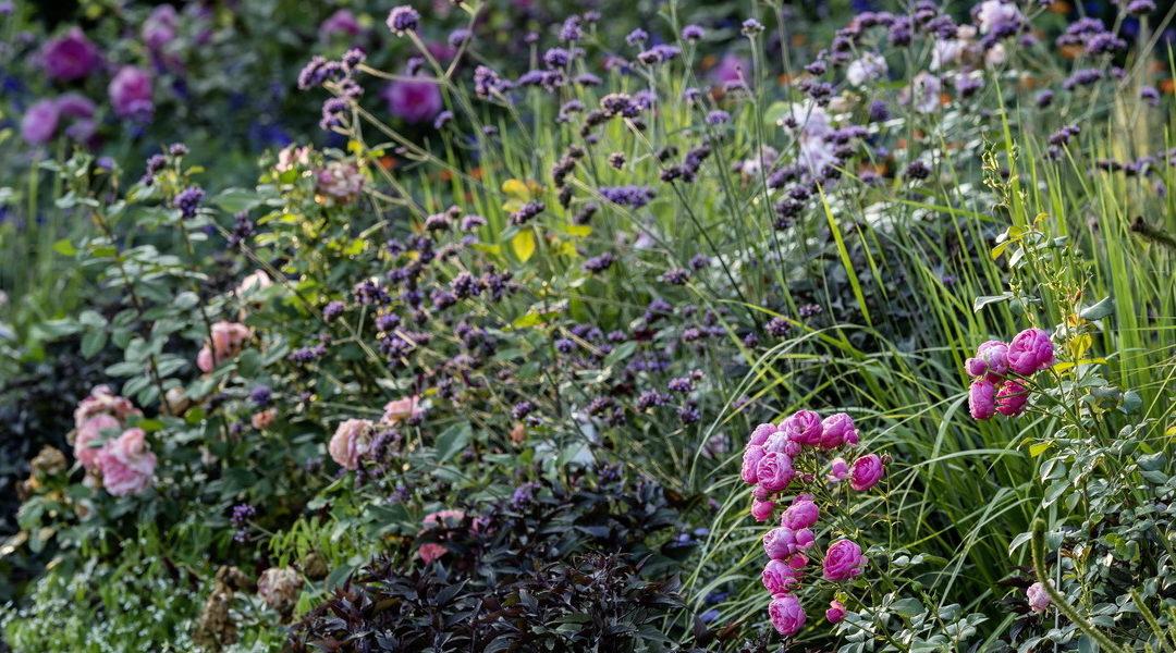 Tatort Pflanzenbeet – Erfahrungen mit Rosen