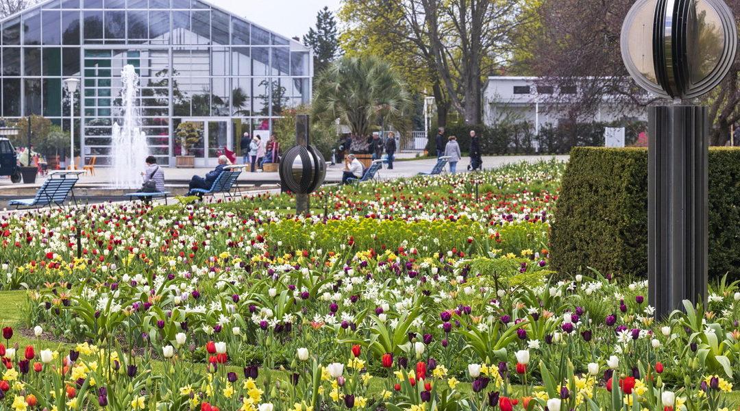 BUGA Erfurt 2021 – ein blühender Park im Frühling