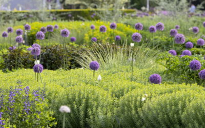 BUGA Erfurt 2021 – Pflanzen die im Juni blühen