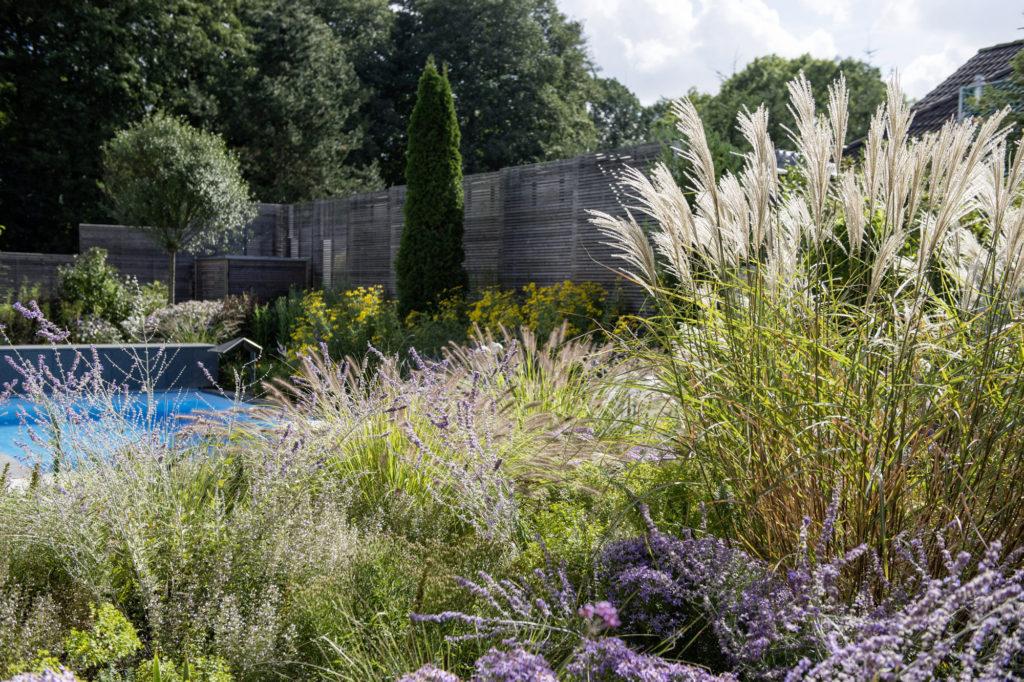 Garten anlegen mit Vorgarten und Swimmingpool