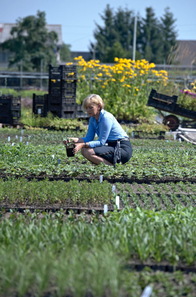 Pflanzen in der Gärtnerei, der enge kontakt mit den gärtnern ist wichtig